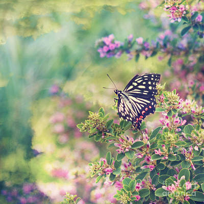 Pretty Butterfly Orange Markings Pink Flowers Green Leaves Art Print