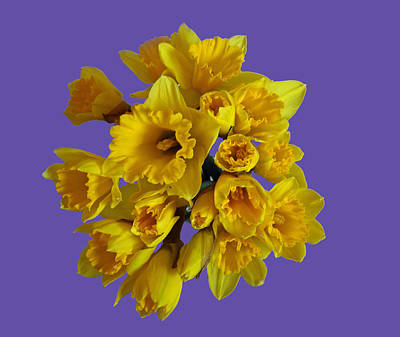 Photograph - Pretty Daffodils by Christopher Rowlands
