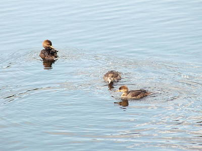 Photograph - Pretty Ducks by Gene Cyr