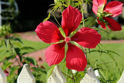 Thomas Kinkade - Pretty Flower by Carolyn Ricks