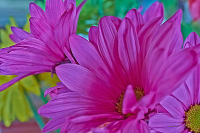 Photograph - Pretty Flowers by Charles Muhle