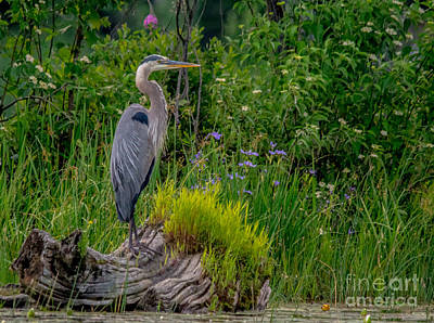 Photograph - Pretty Heron Perch by Cheryl Baxter