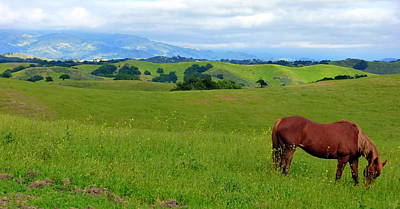 Photograph - Pretty Horse Grazing In Rolling Hills by Jeff Lowe