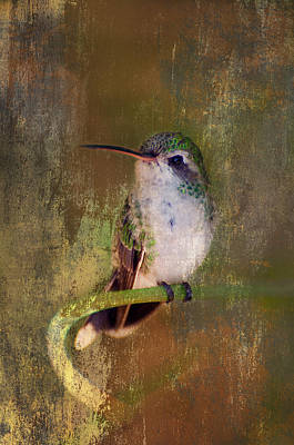 Photograph - Pretty Hummer by Barbara Manis