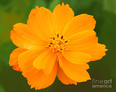 Photograph - Pretty In Orange by Mariarosa Rockefeller