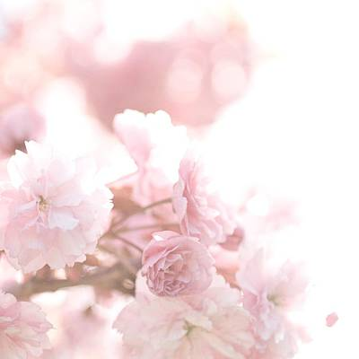 Photograph - Pretty In Pink - The Confetti by Lisa Parrish