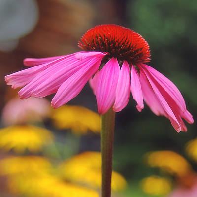 Cone Flower Photograph - Pretty In Pink 2 by Joann Vitali