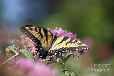 Pretty In Pink All Profits Go To Hospice Of The Calumet Area Art Print