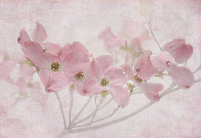 Dogwood Blossom Photograph - Pretty In Pink by Angie Vogel