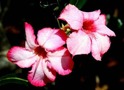 Photograph - Pretty In Pink by Bob Slitzan
