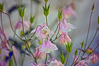 Photograph - Pretty In Pink by Crystal Harman