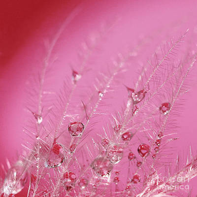 Pretty In Pink Print by Karin Ubeleis-Jones