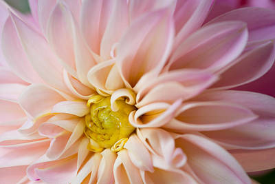 Photograph - Pretty in Pink by Kim Aston