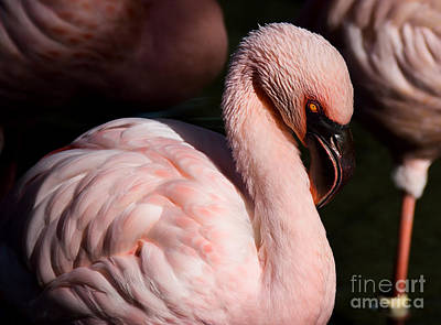 Photograph - Pretty In Pink by Lisa L Silva