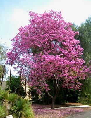 Photograph - Pretty In Pink by Melissa McCrann