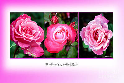 Photograph - Pretty In Pink Roses by Jo Collins