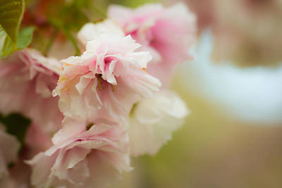 Photograph - Pretty In Pink by Sara Frank