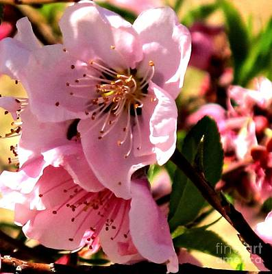 Photograph - Pretty In Pink Spring Flowers by Michaline  Bak