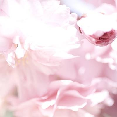 Photograph - Pretty In Pink - The Sweet One by Lisa Parrish