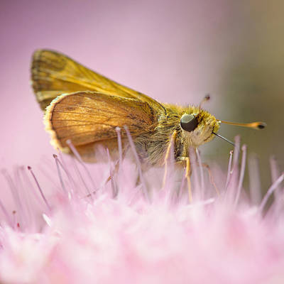 Lifelike Photograph - Pretty In Pink by Vicki Jauron