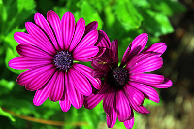 Floral Photograph - Pretty In Purple by Carolyn Ricks