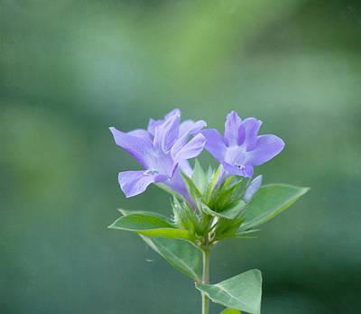 Kim Photograph - Pretty In Purple by Kim Hojnacki