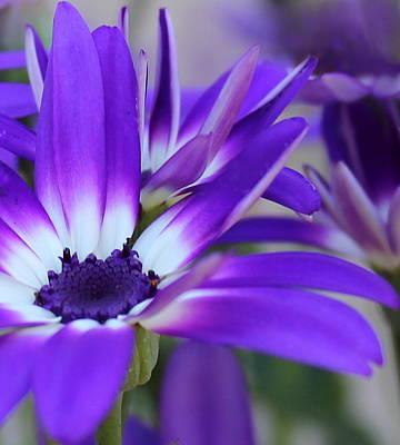 Digital Art - Pretty In Purple by Kume Bryant