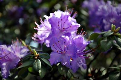 Photograph - Pretty In Purple by Phillip Garcia