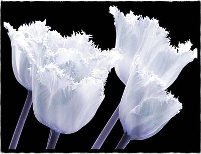 Tulips Digital Art - Pretty In White by Debra  Miller