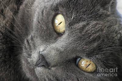 Pretty Kitty Eyes Art Print by Darleen Stry