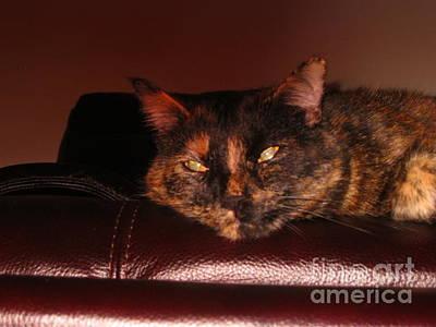 Photograph - Pretty Kitty by Oksana Semenchenko