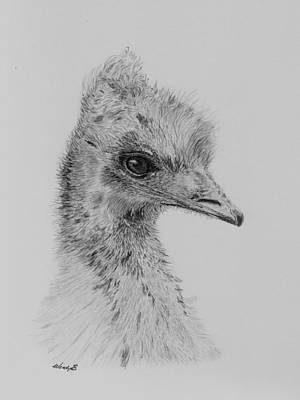 Emu Drawing - Pretty Larry by Wendy Brunell