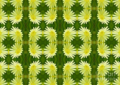 Photograph - Pretty Lemon Yellow Daisies by Beverly Claire Kaiya