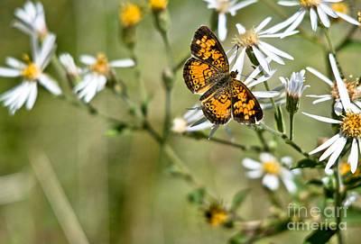 Photograph - Pretty Little Butterfly by Cheryl Baxter