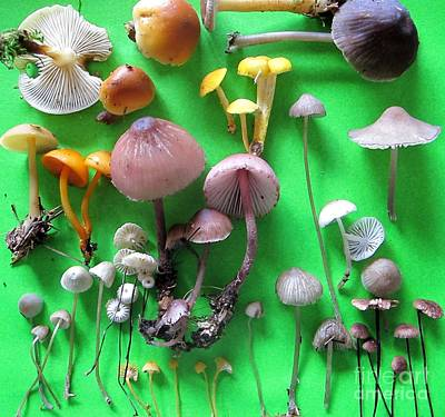 Photograph - Pretty Little Mushrooms by Timothy Myles