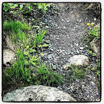 Pathway Photograph - Pretty Little Pathway #nature #pathway by Emily Roberts