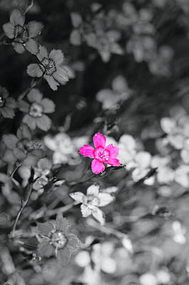 Medford Photograph - Pretty Little Pink Flower by Teri Schuster