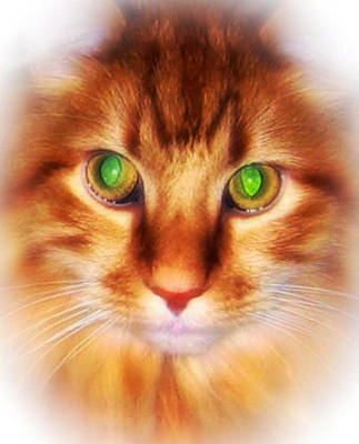 Photograph -  Maine Coon Cat Portrait by Maggie Vlazny