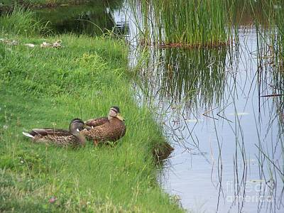 Eunice Miller Photograph - Mated Pair Of Ducks by Eunice Miller