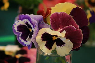 Photograph - Pretty Pansies by Phoenix De Vries