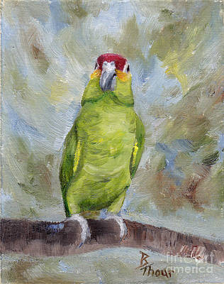 Painting - Pretty Parrot II by Brenda Thour