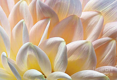 Pretty Pastel Petal Patterns Art Print by Kaye Menner