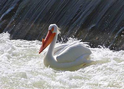 Photograph - Pretty Pelican by Carol Groenen