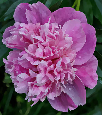 Pretty Peony Art Print by Sandy Keeton