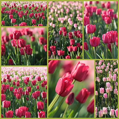 Photograph - Pretty Pink And Green Tulips Collage by Carol Groenen