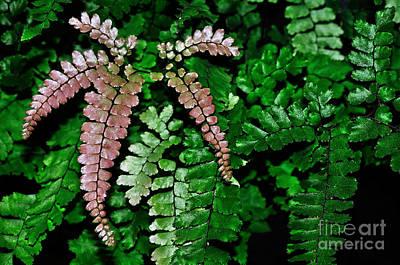 Genus Photograph - Pretty Pink Fern Frond by Kaye Menner
