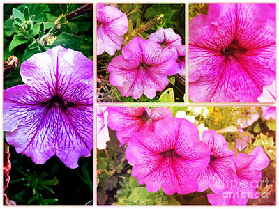 Photograph - Pretty Pink Petunias Collage by Maggie Vlazny