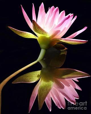 Photograph - Pretty Pink Reflections by Sabrina L Ryan