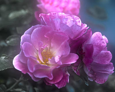 Pretty Pink Roses Art Print by Judy Hall-Folde