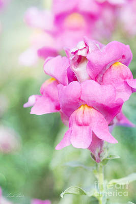 Antirrhinum Photograph - Pretty Pink Snapdragons by Linda Lees
